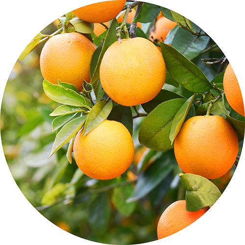 Oli essenziali di Arancio e Mandarino
