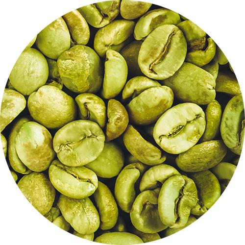 Fitoestratto di Caffè verde