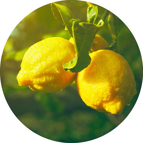 Estratti di Limone
